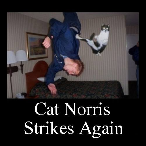 Cat Norris Strikes Yet Again