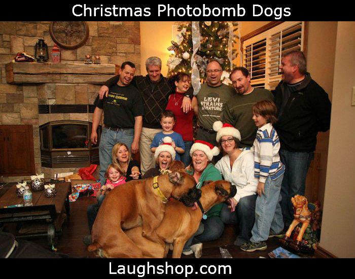 Christmas Photobomb Dogs image