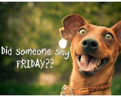 Did Someone Say Friday funny friday dog image