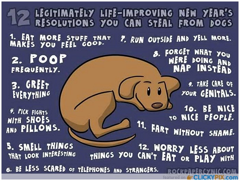 New Years Dog Like Resolutions image