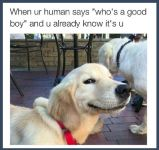 Who Is A Good Boy? image