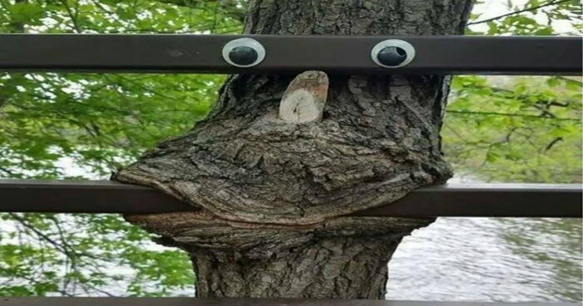 Funny Tree Googly Eyes