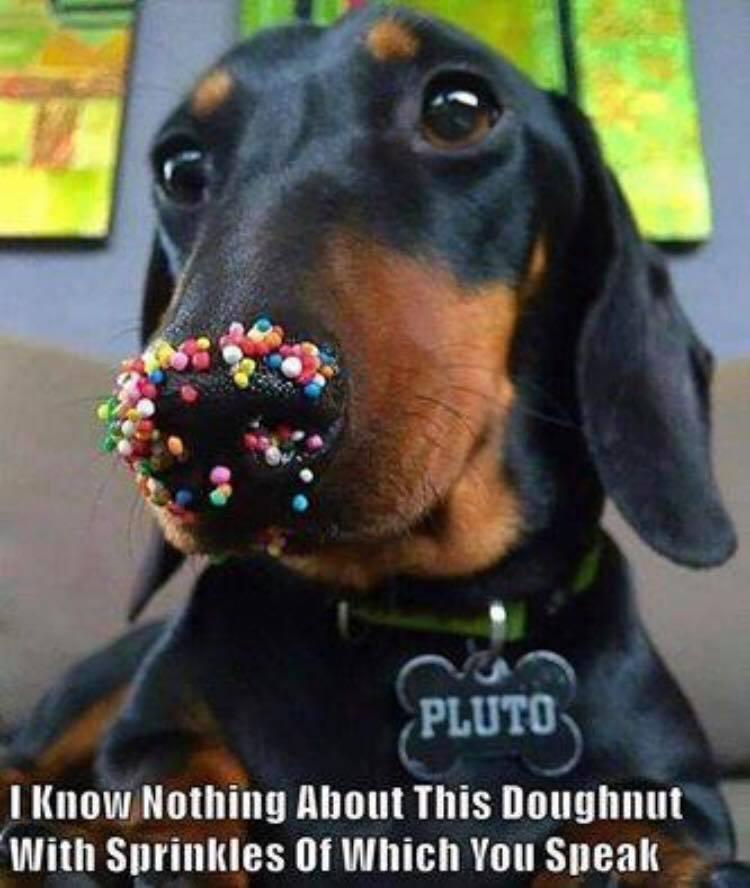 Sprinkles Dog image
