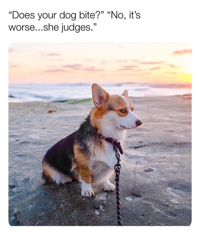 Judgmental Dog