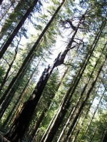 Living tree totem