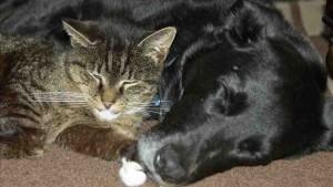 Bild zum Beitrag den Feind lieben: Hund und Katze schlafend auf dem Boden