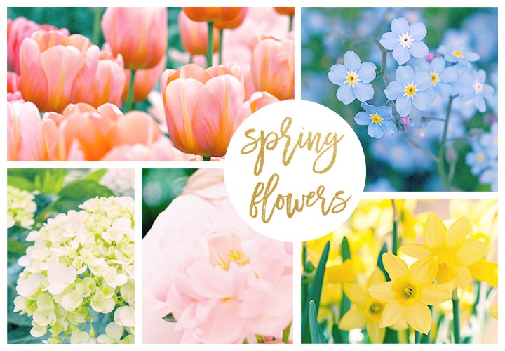 Spring Flowers and Pantone Color Guide