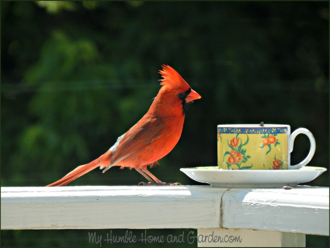 Backyard Bird Feeder - Make Your Own Teacup Bird Feeder - Cardinal on MyHumbleHomeandGarden.com