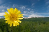 Proljece na Goliji