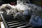 obrada vune