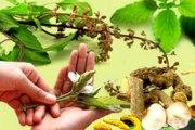 Kako su naši stari obrađivali ljekovito bilje