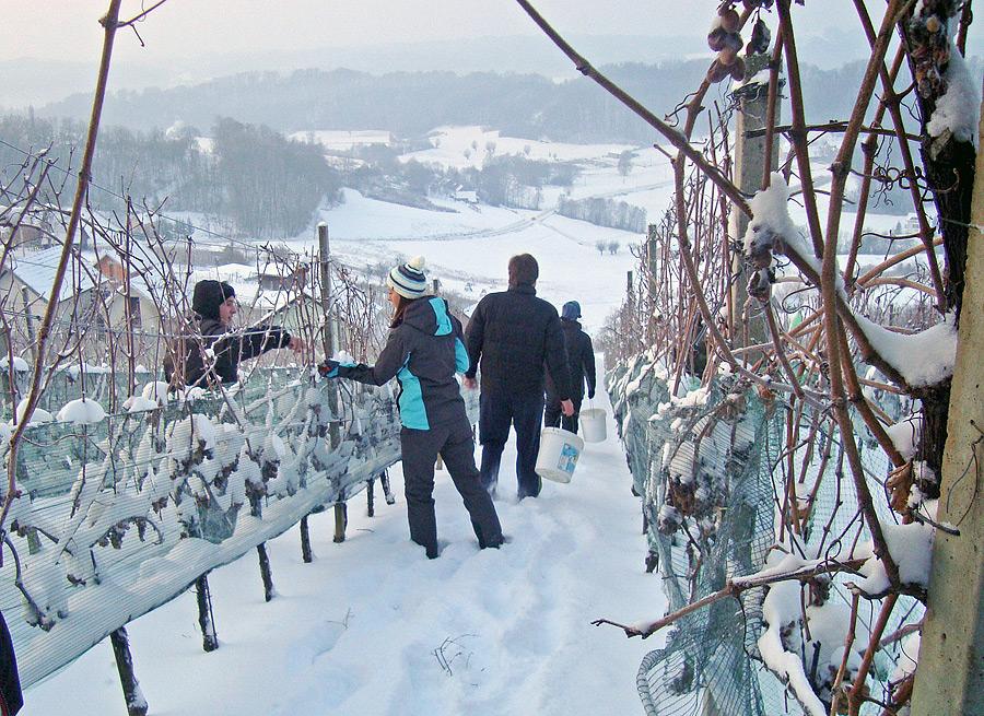 Ledeno vino tradicionalni i rizični užitak smrznutih bobica