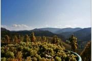 Povijest vinogradarstva na hrvatskom području