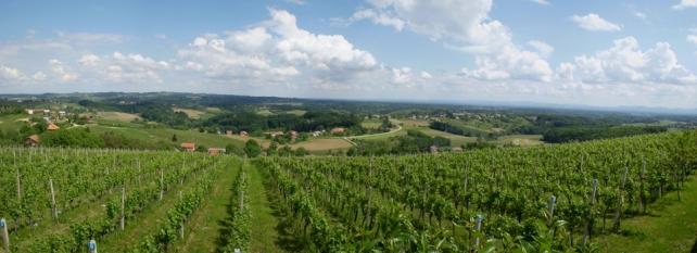 Običaji uz vino i vinograde na našim područjima