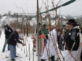 Blagdan Svetog Vinka ili Vincekovo. Običaji i tradicija!
