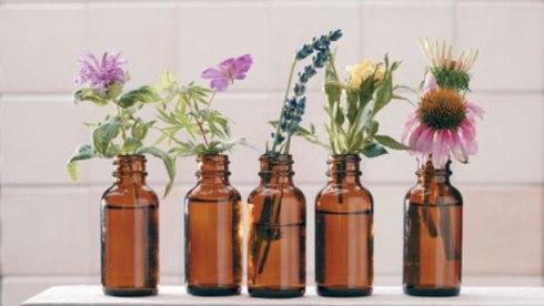 Domaće tinkture od ljekovitih biljaka