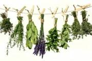 Ljekovito bilje i lječenje ljekovitim biljem kroz prošlost