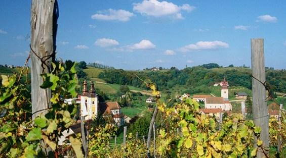 Stari tradicionalni vinogradi i rujno vino