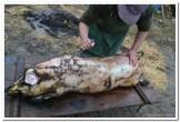 Slavonsko kolinje i tančiranje svinje