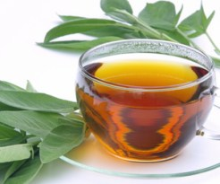 Ljekoviti čaj od eukaliptusa