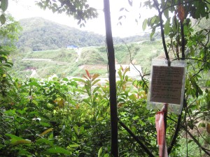 hiking-in-the-cameron-highlands-Marker