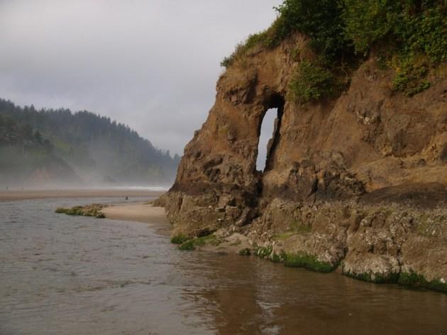 Neskowin Oregon Ghost Forest