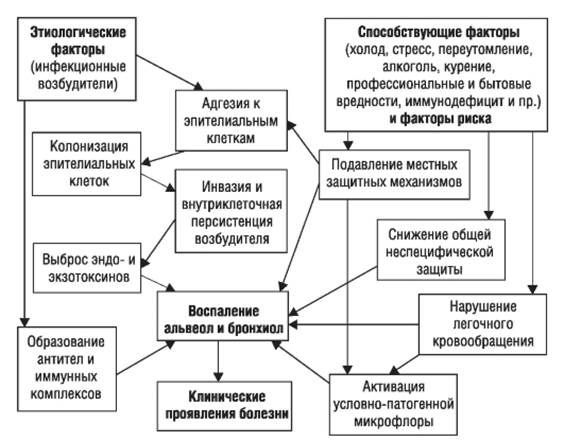 Mechanismus der Entwicklung von Pneumonien