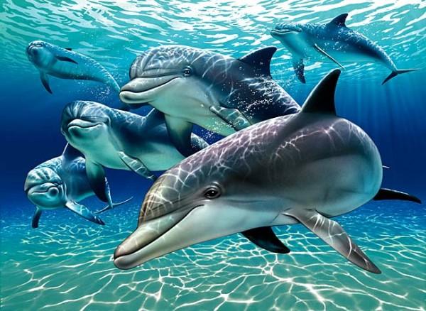 delfini-morski-sisari-600x438