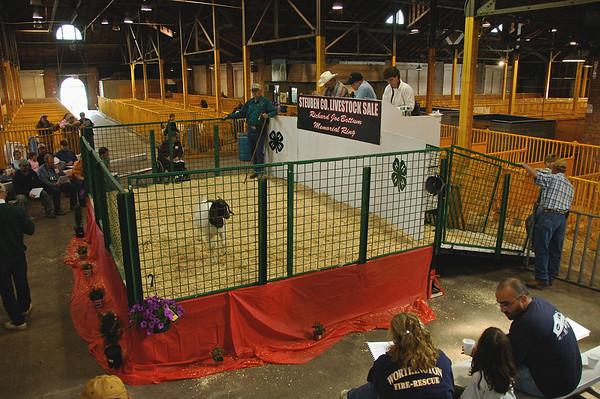 Goat Auction