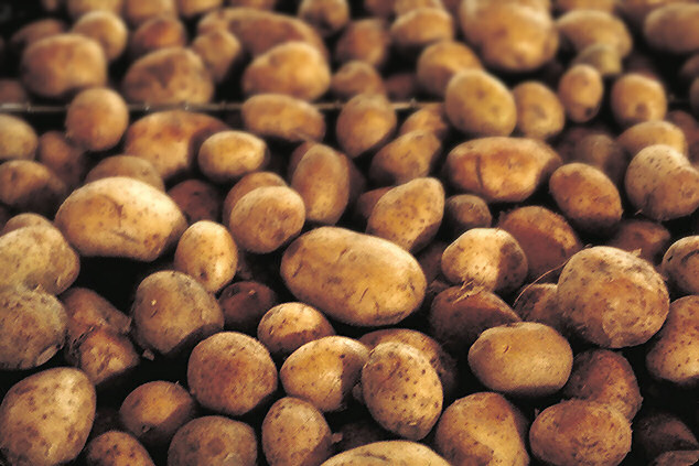 How to grow hundreds of lbs. of potatoes in 4 sq ft
