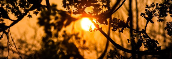 Sunset-Frankfurt-Germany-Blurry-Bokeh-crop