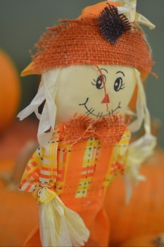 fall-pumpkins-chs-1