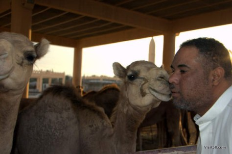 my guide shows some love to the camel in Bahrain