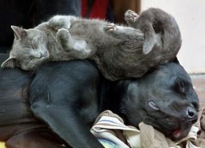 Sleeping Cat and Dog