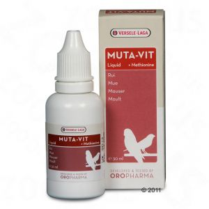 Alimentation des perruches et perroquets: vitamines mue