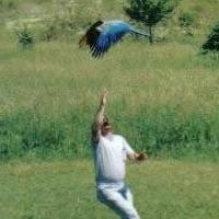 jim_flying_macaw_th