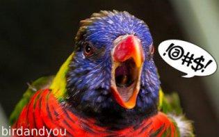 oiseau très cri fort
