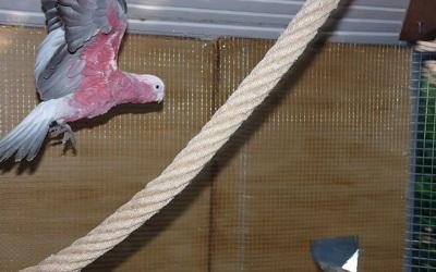 perroquet volière
