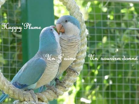 Happy'plume