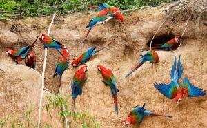 groupe de perroquets 1