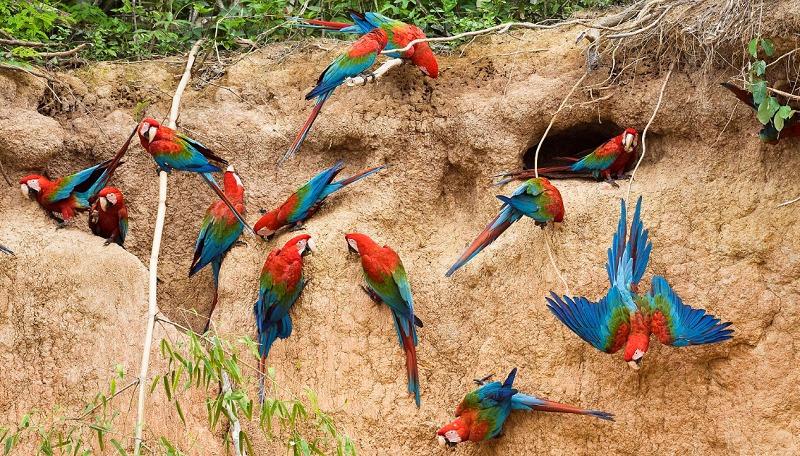 groupe de perroquets