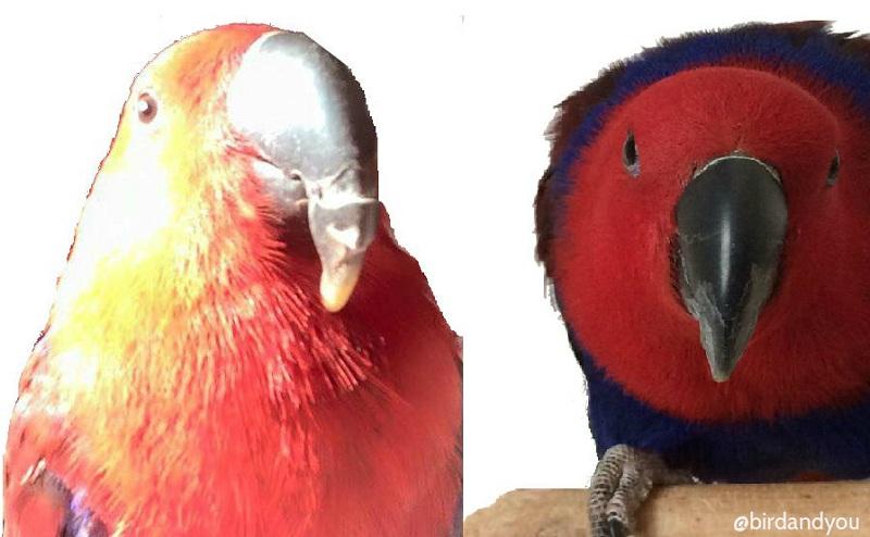 ponçage bec perroquet article