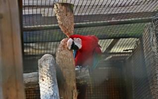 Zoo de Lille: visite et volière immersive