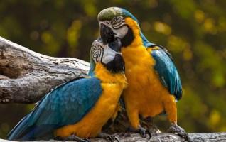 Des perroquets qui rougissent d'émotion