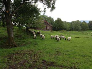 landwirtschaft_norwegen-300x225