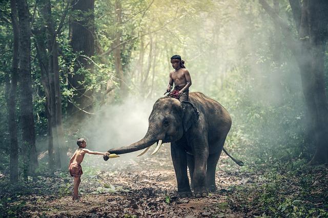 Elefant mit Reiter im Dschungel von Kambodscha