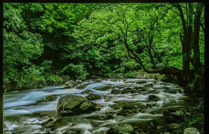 Central Balkan Wilderness