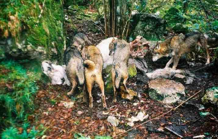 Fapas Astruais Livestock Protection-22000.jpg