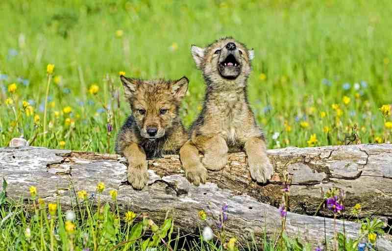 EWS - Wildlife -08709_.jpg-