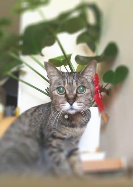 愛猫・ピース、めでたく20歳の誕生日!